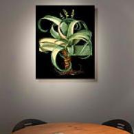 Besler's Aloe 20in X 24in Canvas Print