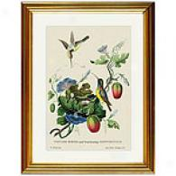 Birds & Fruit Bearing Convoivuls Framed Print