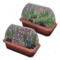 Black Dragons Planting Kit/windowsill Greenhouae