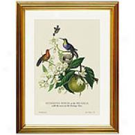 Hummingbirds At The Brasils Framed Print