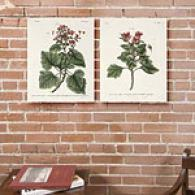 Set Of 2 Geranium Arborefcens Canvas Prints