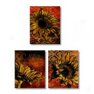 Sunflower 11x14 Set Of 3 Canvas Prints