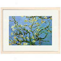Van Gogh Branches With Almond Blossoms Impress