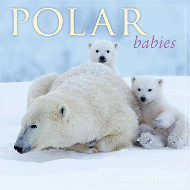 Polar Babies Calendar
