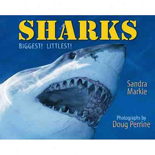 Sharks: Biggest! Littlest!