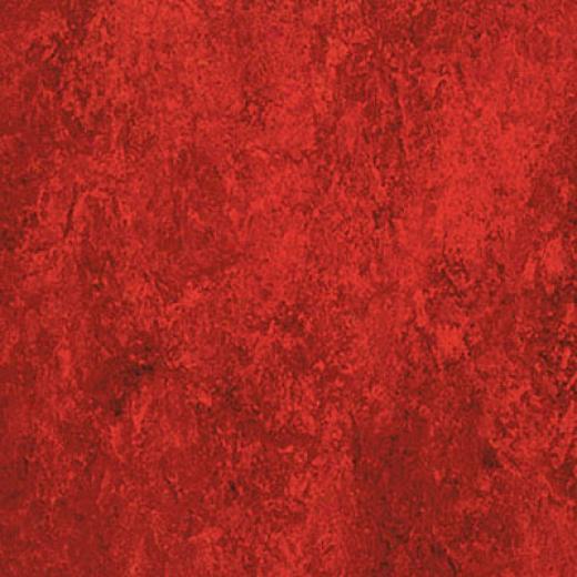 Forbo Marmoleum Dual Cardinal Vinyl Flooring