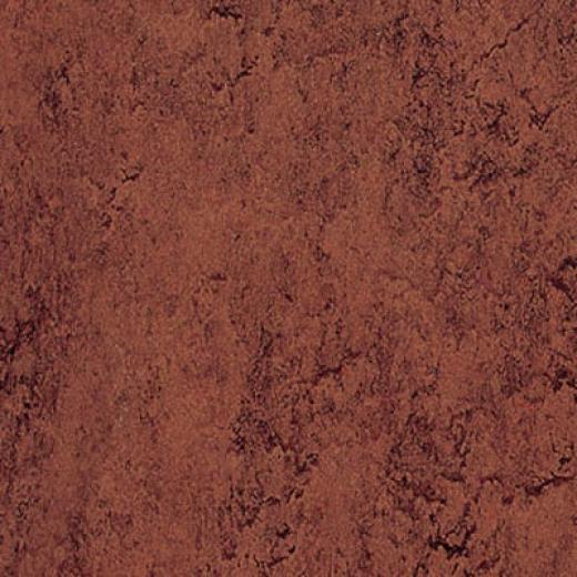 Forbo Marmoleum Dual Coffee Vinyl Flooring