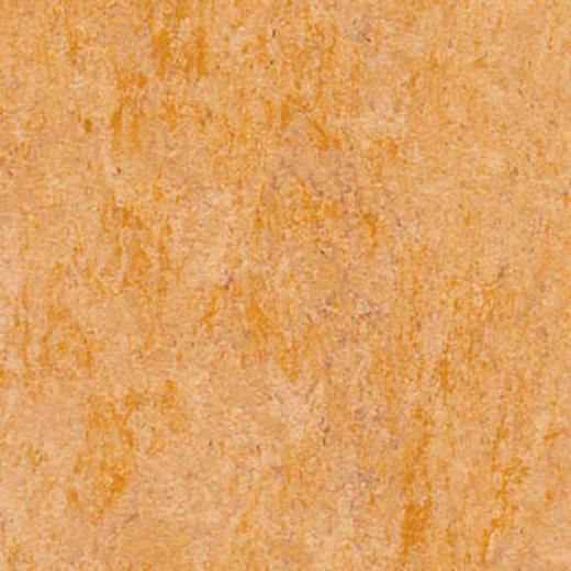 Forbo Marmoleum Dual Cotswold Vinyl Flooring