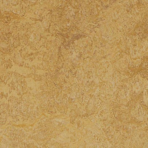 Forbo Marmoleum Real 1/8 Van Gogh Vinyl Flooring