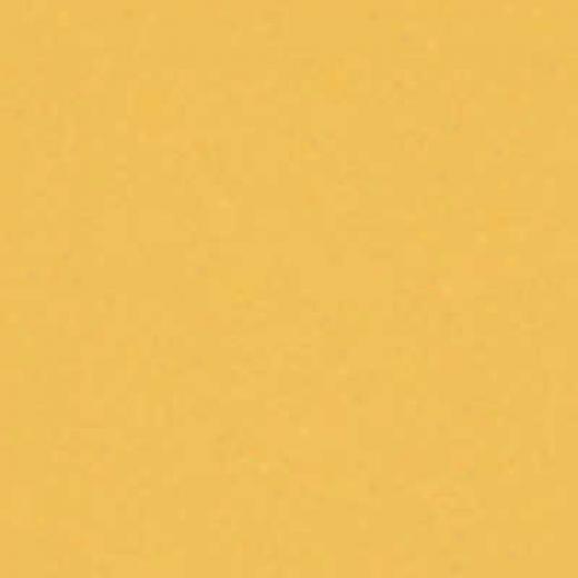 Interceramic Bold Tones 4 X 4 Goldenrod Tile & Stone