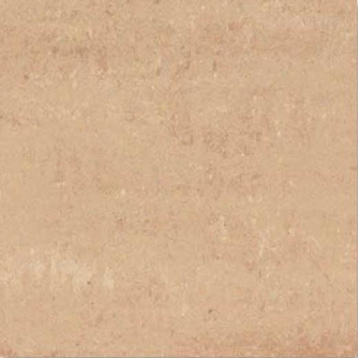 Interceramic Valencia 12 X 12 Polished Albero Tile & Stone