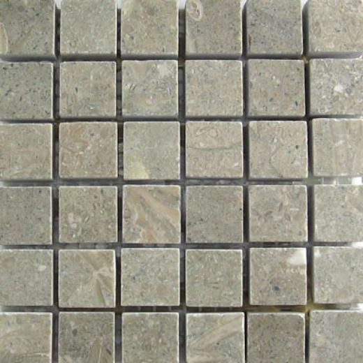 Mohawk Marblestone Mosaics Polished Fossil Grey Tile & Face with ~