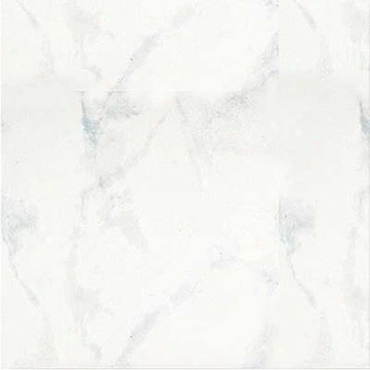 Portobello Marmi 18 X 18 Carrara Bianco Tile & Stone