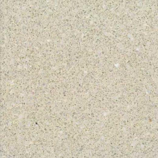 Santa Regina Architectural 24 X 24 (polished) Buttercream Terrazzo Tile
