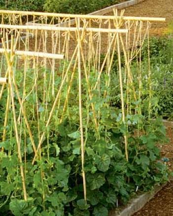 #4 Bamboo Poles, Set Of 24