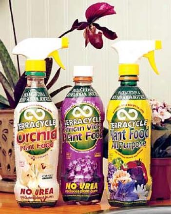 African Violrt Fertilizer
