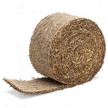 Barley Strip