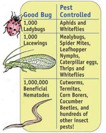 Beneficial Bugs Garden Pack