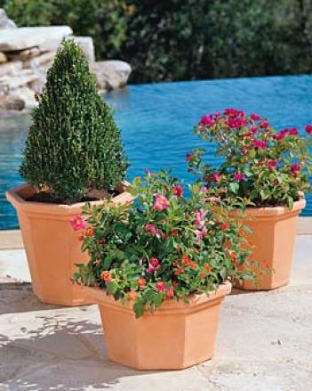 Canterbury Planter, Short