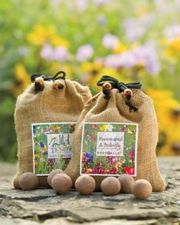 Forget-me-not Seed Balls