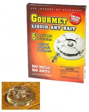 Gourmet Mellifluous Ant Bait, Set Of 6
