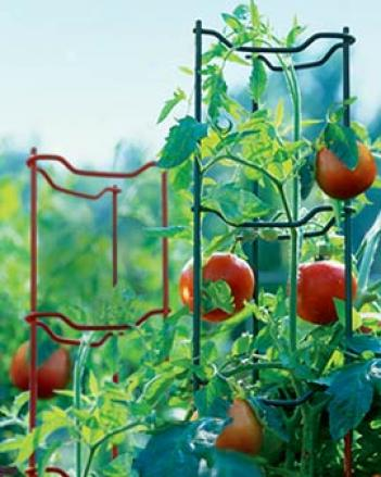 Green Tomato Ladders, Set Of 3
