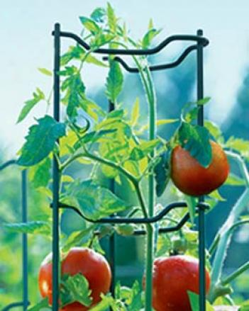 Green Tomato Ladders, Se Of 5