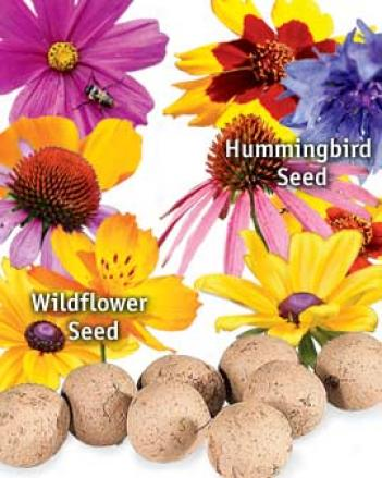 Hummingbird Seed Balls, Set Of 16