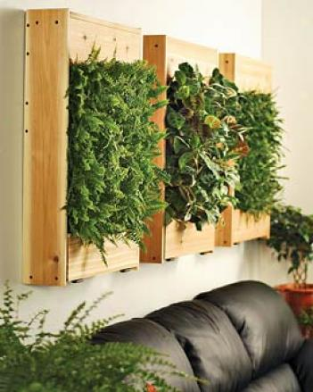Indoor Living Wall Kit