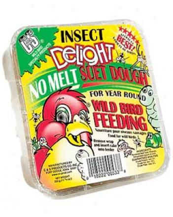 Insect Delight Suet Cakes, 3 Pack