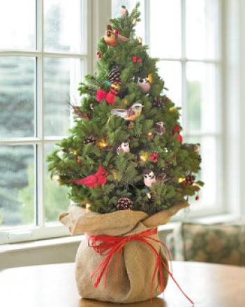 Live Decorated Spruce Tree