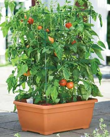 Orrganic Tomato Success Kit, Terra Cotta