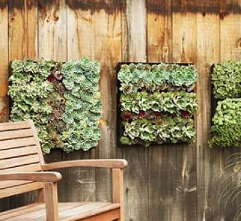 Outdoor Living Wall Planting Grdi
