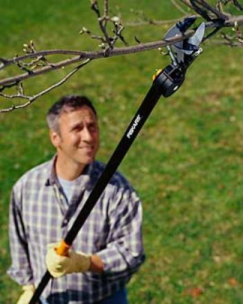 Pruning Srik Tree Pruner