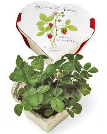 Recyclabowl Strawberries