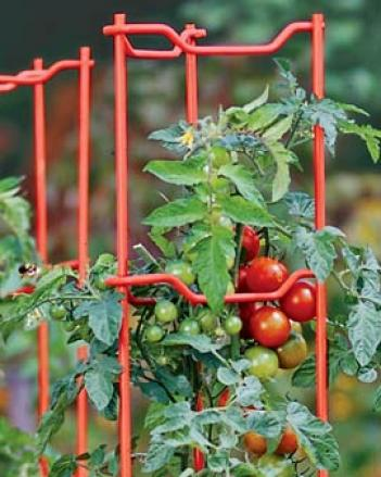 Red Tomato Ladders ,Set Of 5