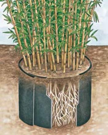 Root Block