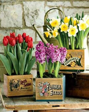 Seadov Tulips In Vintage Box