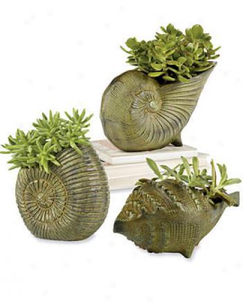 Seashell Poanters, Set Of 3