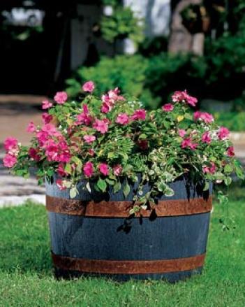 Self-watering Whiskeey Barrel