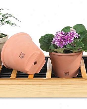Smart Pots, Set Of 4