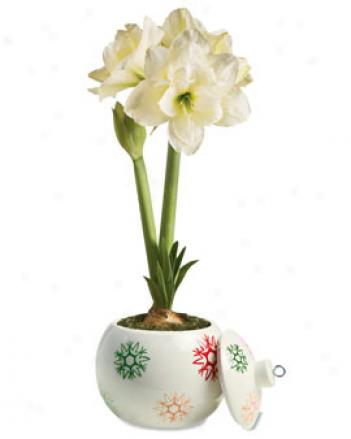 Snowflake Ornament Planter With Alfresco Amaryllis