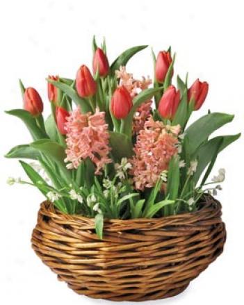 Springtime Bulb Garden
