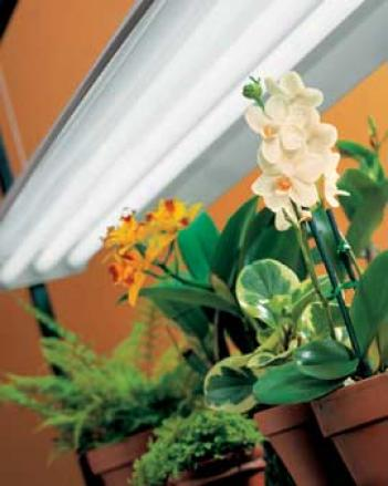 Sunlite® Fixture With Bulbs