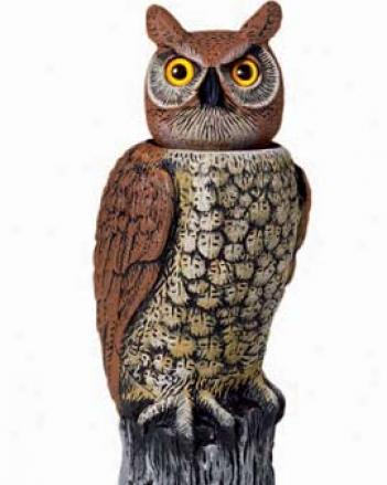 Swiveling--head Horned Owl