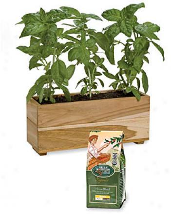 Teak Herb Planter