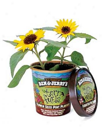 Terra Fuela Sunflower Kit