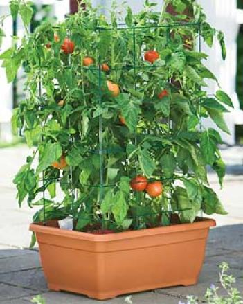 Tomatp Success Kit, Terra Cotta