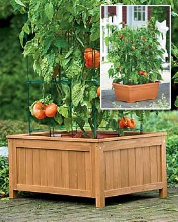 Tomato Success Kit With Wood Circle, 14