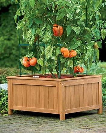 Tomato Success Kit With Wood Enclosure, 31